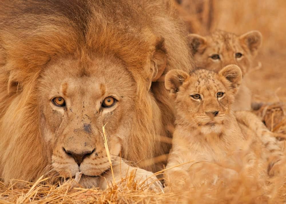 Africa do Sul - Safari